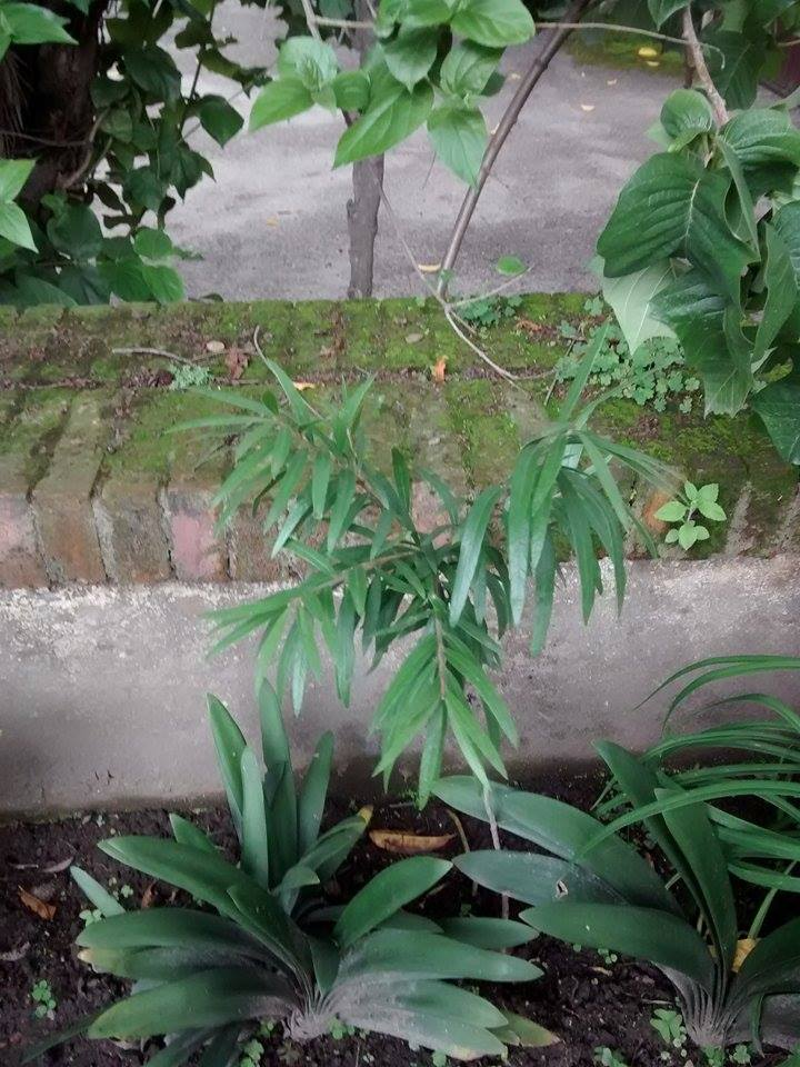 Result of the saplings given, planted and taken care of :)